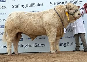 Balthayock Gunner at 17,000gns