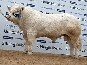 Blackford Gladiator at 17,000gns