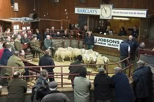 Longtown sheep ring